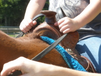 riding-hands074.JPG