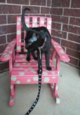 Life With Ladybug: Kitten crisis!