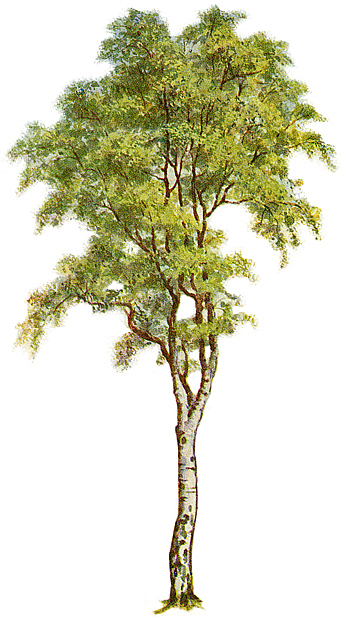 tree-clipart-5.jpg