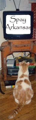 tv-cat-2.jpg