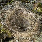 Empty Nexter: Spreading your wings in the empty nest