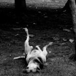 Pet Parenting: An itchy scratchy dog