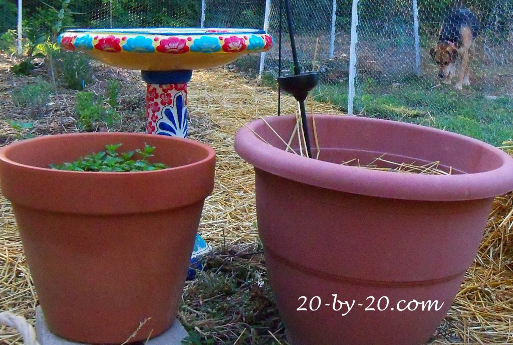 Gardening: Yes, you have time to plant fall veggies!
