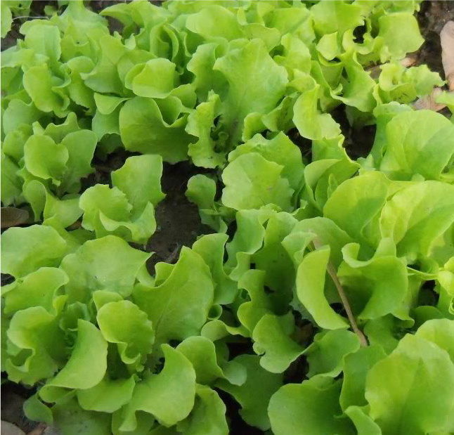 Gardening: Things to do before the first frost