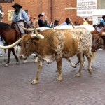 Blog 66: Things to do in Fort Worth, Texas