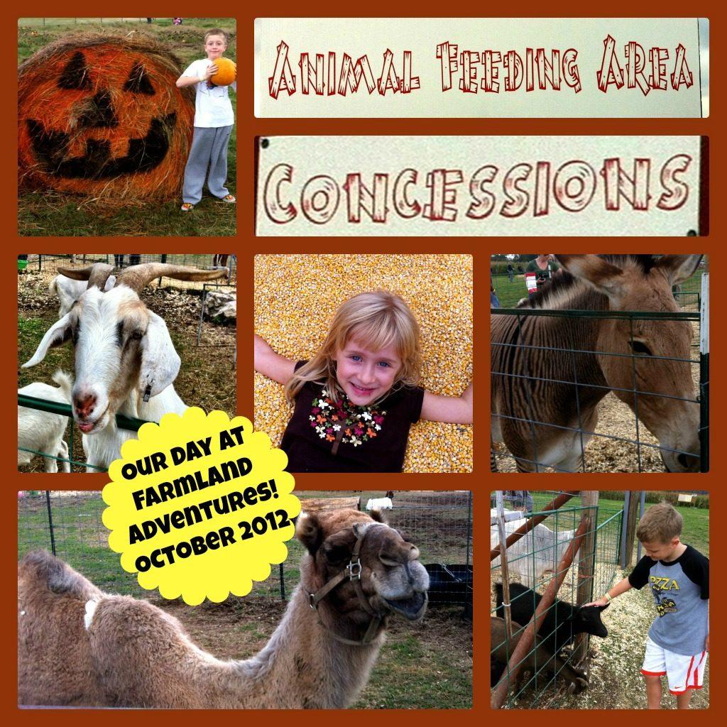 Photo report: Fun fall day at Farmland Adventures