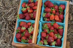Kathleen, berries