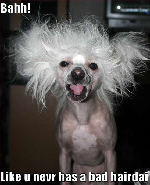 bad hair day dog