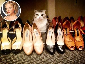 taylor swift cat photo