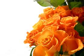 orange roses