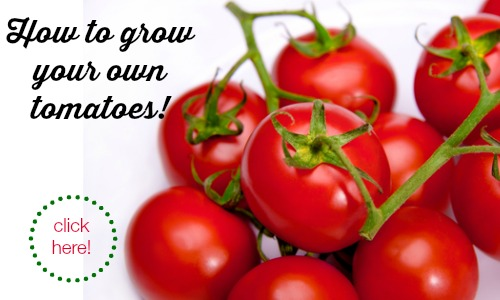 Gardening: How to grow tomatoes this summer!