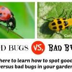 Gardening: Good Bug, Bad Bug