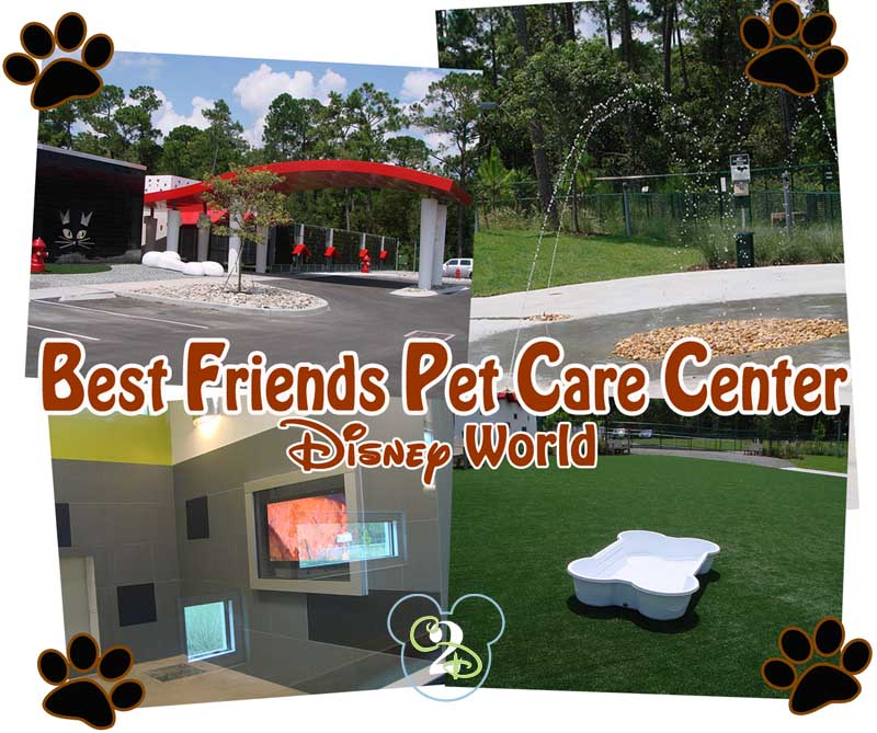 Pet parenting how to take the dog on your disney trip for Dog kennels near disney world