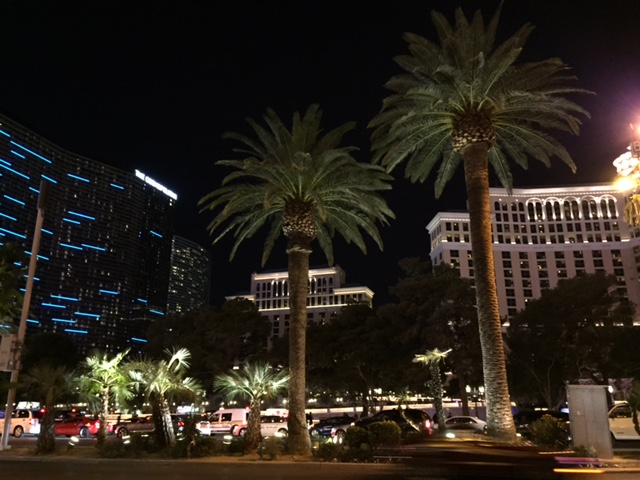 vegas palm trees