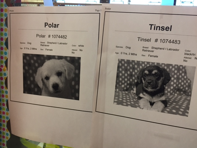 At the animal shelter, flyer