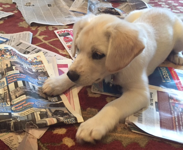 Harley reading the paper