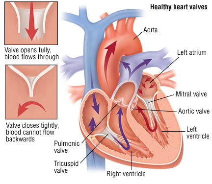 Matters of the heart: valve disease, aortic aneurysm and crucial tests