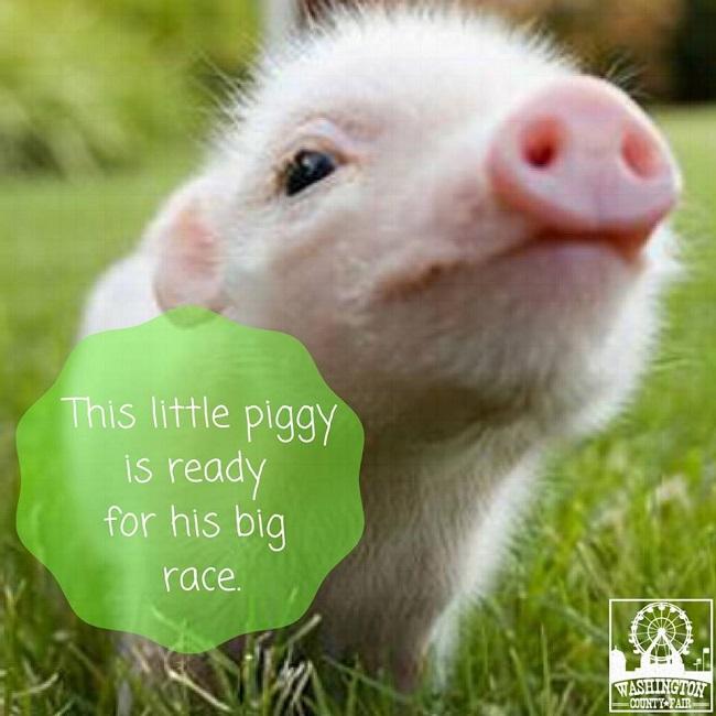 Fair, little piggy