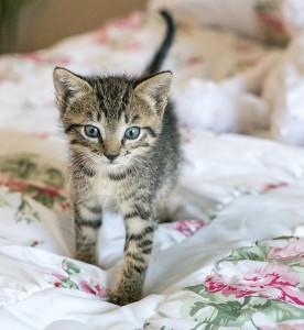 kitten-1517535_640 (2)