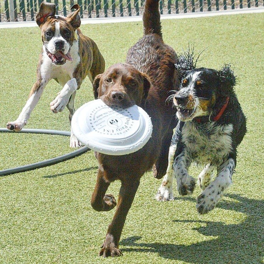 dogs-at-dog-party