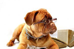 dog-in-glasses
