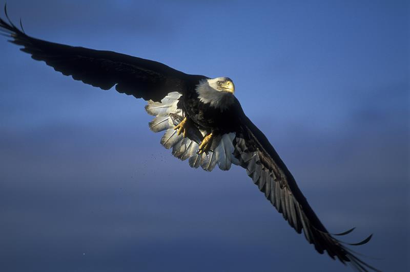 eagle, hobbs state park