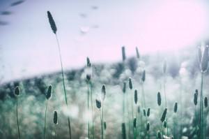 grass-828706_640 (2)