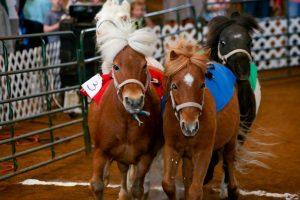 Mini Horse Racing