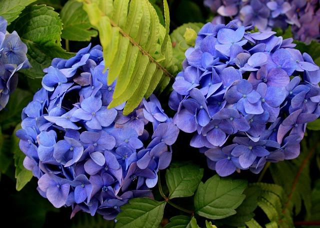 flowers-187946_640 (2)
