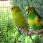 Devotion in Motion: 6 lessons learned from parakeets