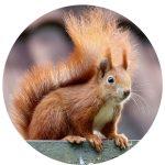 Funny Friday: The Squirrel Proof Bird Feeder