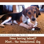Mamas on Magic 107.9: Transitional pets to soak up a mama's love