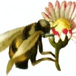 Beauty Buzz: How to be gorgeous through pollen season
