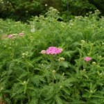 Gardening: Low-maintenance flowers