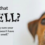 "How to prevent and cure that ""weird smell"""
