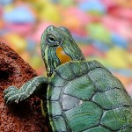 The Rockwood Files: A turtle by any other name…