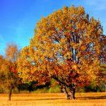 Devotion in Motion: Time to enjoy the stillness