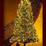 The Mac Boys by the Christmas Tree