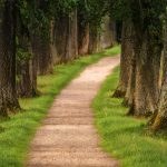 Devotion in Motion: He will make a path