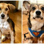 The Rockwood Files: A Doggie Dynamic Duo