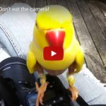 Friday Funny: Don't eat the camera!
