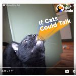 Friday Funny: What your cat is really saying