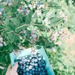 Fun Family Outings 2020: Where to pick berries in Northwest Arkansas